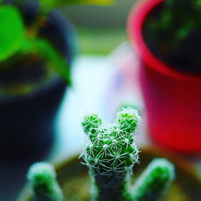 Cute Thorns